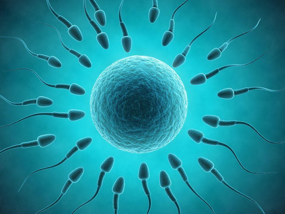 Донорство яйцеклеток в Краснодаре