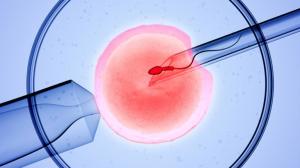 Найти донора яйцеклетки поможет агентство Зарождение